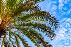 Foglia della noce di cocco con cielo blu Immagini Stock