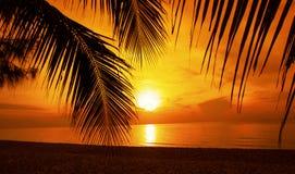 Foglia della noce di cocco della siluetta Fotografia Stock