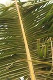 Foglia della palma su un fondo del cielo Immagini Stock