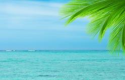 Foglia della palma sul fondo dell'oceano Fotografie Stock