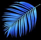 Foglia della palma sul nero Fotografia Stock Libera da Diritti