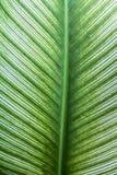 Foglia della pianta Fotografie Stock Libere da Diritti