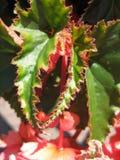 Foglia della pianta Fotografia Stock