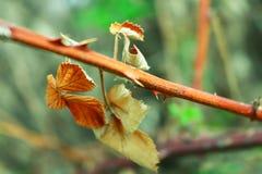Foglia della pianta Fotografia Stock Libera da Diritti