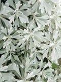 Foglia della pianta bianca e verde Fotografia Stock Libera da Diritti