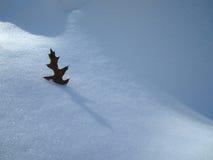 Foglia della quercia Immagini Stock