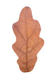 Foglia della quercia come simbolo di autunno Immagini Stock
