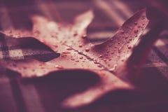 Foglia della quercia con le goccioline di acqua fotografia stock libera da diritti