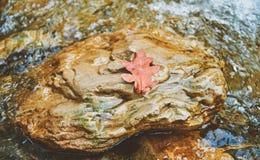 Foglia della quercia gialla sulla pietra Fotografia Stock Libera da Diritti