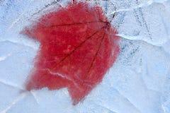 Foglia di acero congelata all'interno di un ghiaccio cristal strutturato Fotografia Stock Libera da Diritti