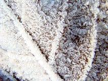 Foglia di acero coperta di gelo 2. immagini stock libere da diritti
