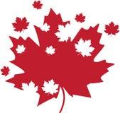 Foglia di acero del Canada Immagine Stock Libera da Diritti