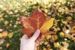 Foglia di acero della tenuta dell'uomo nel parco di autunno Immagine Stock Libera da Diritti