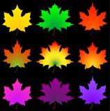 Foglia di acero di autunno. Fotografie Stock