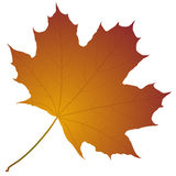 Foglia di acero di autunno Immagini Stock Libere da Diritti