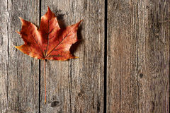 Foglia di acero di autunno sopra fondo di legno Fotografia Stock