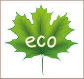 Foglia di acero di Eco Fotografia Stock