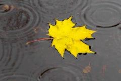 Foglia di acero dorata sull'acqua Fotografia Stock Libera da Diritti