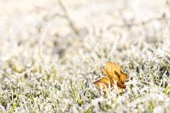 Foglia di acero ed erba in una mattina soleggiata di ottobre del gelo Fotografie Stock Libere da Diritti