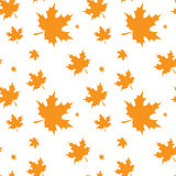 Foglia di acero gialla Autumn Seamless Pattern Immagine Stock