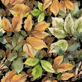 Foglia di acero isolata Fogliame floreale del giardino botanico della pianta della foglia Modello senza cuciture del fondo Strutt royalty illustrazione gratis