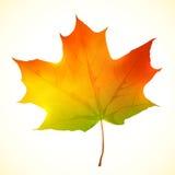 Foglia di acero luminosa isolata di vettore di autunno Immagine Stock Libera da Diritti