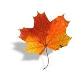 Foglia di acero multicolore con ombra fotografie stock libere da diritti