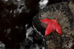 Foglia di acero rossa come simbolo di autunno Immagini Stock