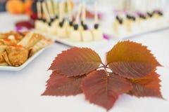 Foglia di acero rossa di autunno Fotografia Stock