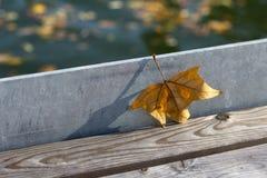 Foglia di acero sola sul pilastro Fotografie Stock