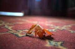 Foglia di acero su tappeto Fotografia Stock Libera da Diritti
