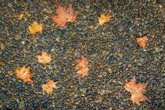 Foglia di acero sul pavimento nella pioggia del giorno Fotografie Stock Libere da Diritti