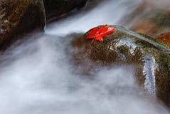 Foglia di acero sulla roccia bagnata Immagini Stock Libere da Diritti