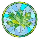 Foglia di acero verde Immagini Stock Libere da Diritti