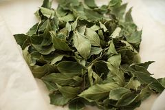 Foglia di alloro asciutta fresca verde per cucinare Immagine Stock Libera da Diritti
