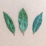 Foglia di alloro secca sui precedenti marroni, un fondo di 3 foglie di alloro Fotografia Stock Libera da Diritti