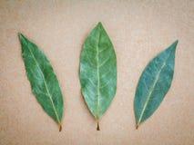 Foglia di alloro secca sui precedenti marroni, un fondo di 3 foglie di alloro Fotografie Stock Libere da Diritti
