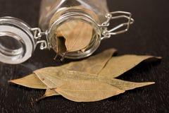 Foglia di alloro in un vaso di vetro Fotografie Stock