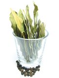 Foglia di alloro in un vetro Fotografia Stock Libera da Diritti