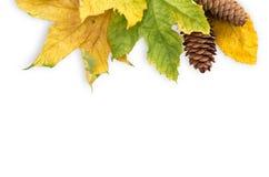 Foglia di autunno Immagini Stock Libere da Diritti