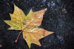 Foglia di autunno Immagini Stock
