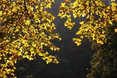 Foglia di autunno Fotografia Stock