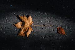 Foglia di autunno Fotografie Stock