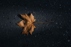 Foglia di autunno Fotografia Stock Libera da Diritti