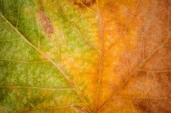 Foglia di autunno con una pendenza fotografia stock libera da diritti