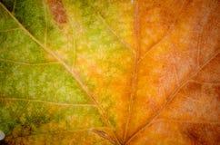 Foglia di autunno con una pendenza immagine stock