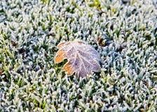 Foglia di autunno coperta nel gelo immagine stock