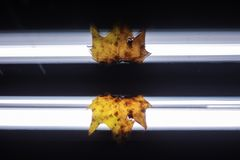 Foglia di autunno riflessa specchio fotografia stock