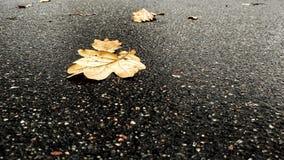 Foglia di autunno su asfalto Fotografia Stock Libera da Diritti