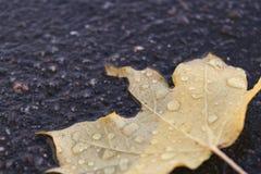 Foglia di autunno su asfalto Immagine Stock Libera da Diritti